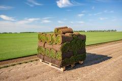 Rolls di tappeto erboso impilato in preparazione pronto ad essere risieduto in prato inglese a terra immagine stock