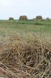 Rolls do feno em um prado Imagem de Stock Royalty Free