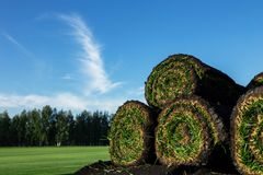 Rolls of fresh grass turf Stock Photo