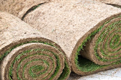 Rolls of grass Stock Photo