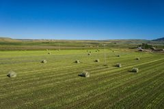 Rolls of Green Hay Bales Royalty Free Stock Image