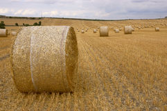 Rolls of hay. A field of straw bales Stock Photos