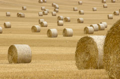 Rolls of hay. A field of straw bales Royalty Free Stock Images