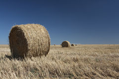 Rolls of hay. Laying on the lands Royalty Free Stock Image