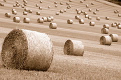 Rolls of hay. Field of straw balessepia toned Royalty Free Stock Photos