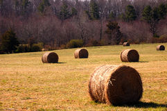 Rolls of hay. A closeup of a hay field Stock Photography