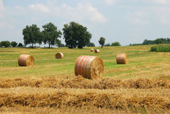 Rolls of hay Stock Photo