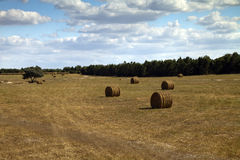 Rolls of hay Royalty Free Stock Photo