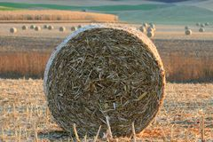 Rolls of hay Stock Images