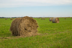 Rolls of hay Stock Photos