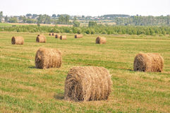 Rolls of hay in a field. Stock Photography