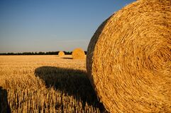 Rolls of Hay in the Field Royalty Free Stock Images