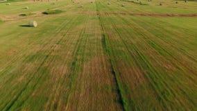 Rolls of hay on a field stock video