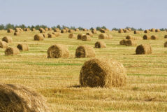 Rolls of hay on field in the countryside Royalty Free Stock Image