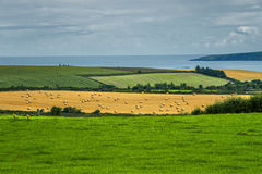 Rolls of hay on the field after harvest. Ireland Royalty Free Stock Photos