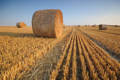 Rolls of hay on the field after harvest stock images