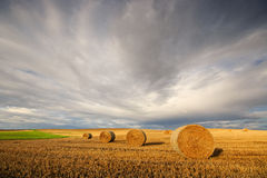 Rolls of hay on the field after harvest Stock Photography