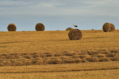 Rolls of hay on the field after harvest Royalty Free Stock Photography