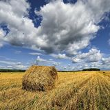 Rolls of hay on the field after harvest. poland Stock Images