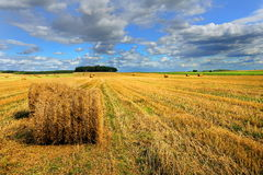 Rolls of hay on the field after harvest. poland Royalty Free Stock Image