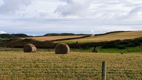Hay. Rolls of hay in the field Royalty Free Stock Photography