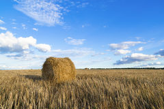 Rolls of hay in field Stock Photo