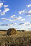 Rolls of hay in field Stock Image