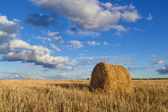 Rolls of hay in field Stock Images