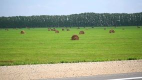 Rolls of hay in field stock footage