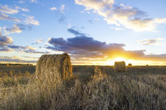 Rolls of hay in field at sunset Stock Image
