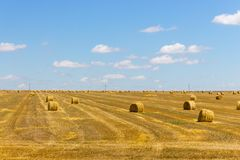 Rolls of hay in field of wheat. Haystacks in farmland. Wheat harvest concept. Round bales of hay. Stock Photo