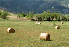 Rolls of hay on the field Stock Photos