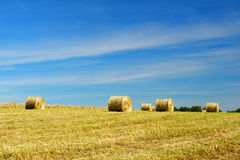 Rolls hay in fields Royalty Free Stock Photography