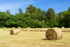 Rolls hay in fields Stock Image