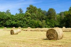 Rolls hay in fields Stock Image