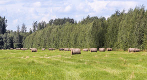 Rolls of hay in the forest field. Royalty Free Stock Photography