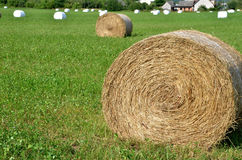 Rolls of hay on green field, most of them wrapped in white foil.  Stock Photo