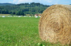 Rolls of hay on green field, most of them wrapped in white foil.  Stock Photos