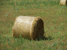 Rolls of hay on the green field Royalty Free Stock Image