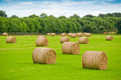 Rolls of hay in Irish meadow. Rolls of hay in green Irish meadow on sunny day Royalty Free Stock Photography