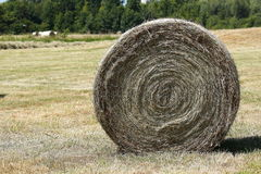 Rolls of hay in the middle of fields at drying. Large rolls of hay in the middle of fields at drying stock image
