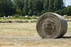 Rolls of hay in the middle of fields at drying. Large rolls of hay in the middle of fields at drying royalty free stock photography