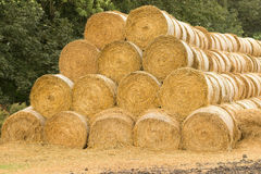Rolls of hay. Hay rolled up into rolls. Many coils are stacked Stock Image
