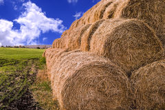 Rolls of hay stacked in a stack on the field against the blue sk Stock Photos