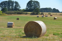 Rolls of Hay, Willamette Valley, Oregon. Round bales of hay in a field in Oregon`s Willamette Valley west of Salem on a summer day royalty free stock photos