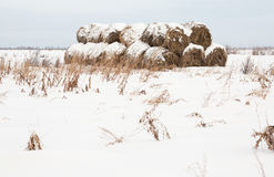 Rolls of haystack Royalty Free Stock Photography