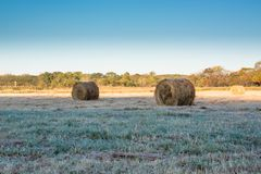 Rolls of haystacks on the field. Royalty Free Stock Photography