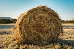 Rolls of haystacks on the field. Grass plated by hoarfrost Royalty Free Stock Image