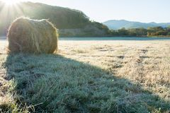 Rolls of haystacks on the field. Grass plated by hoarfrost Royalty Free Stock Photography