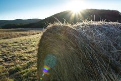 Rolls of haystacks on the field. Grass plated by hoarfrost Stock Images